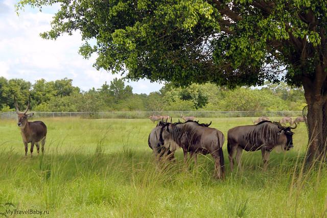 safari015