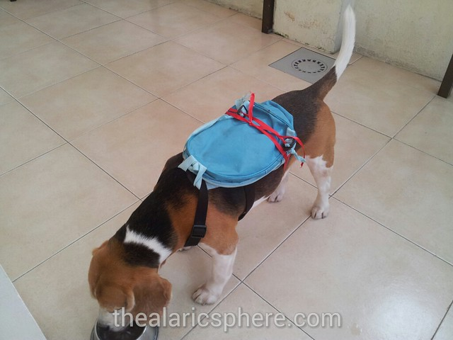 Dog-Beagle-Costume-Tony-Chopper-One-Piece-bag