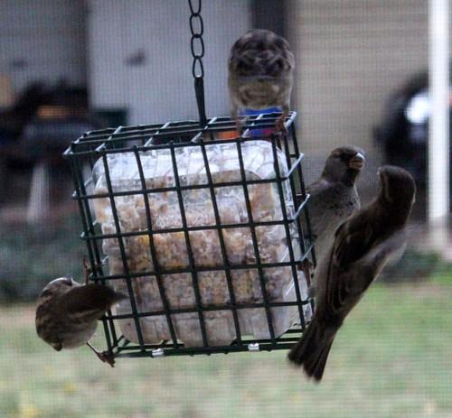 birdssuet1-1