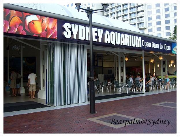 【雪梨】雪梨水族館 Sydney Aquarium