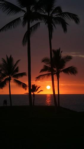 sunset hawaii palm kealekekua
