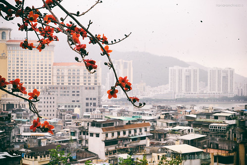 china garden cityscape macau cina macao