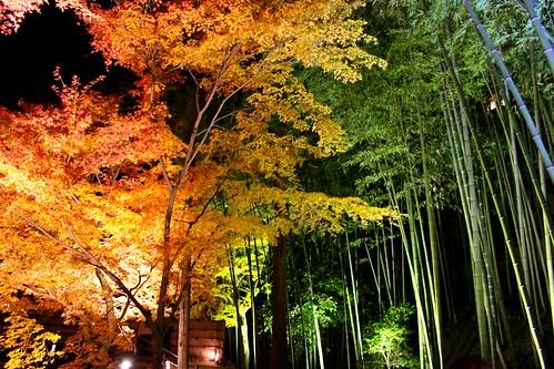 京都:北野天満宮(2013.12.3)
