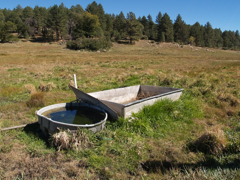 Cattle watering trough north of Big Laguna Lake