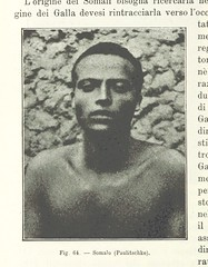 """British Library digitised image from page 222 of """"Africa. Antropologia della stirpe Camitica, etc"""""""
