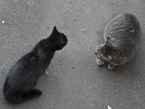 猫、睨み合い_2013-12-12