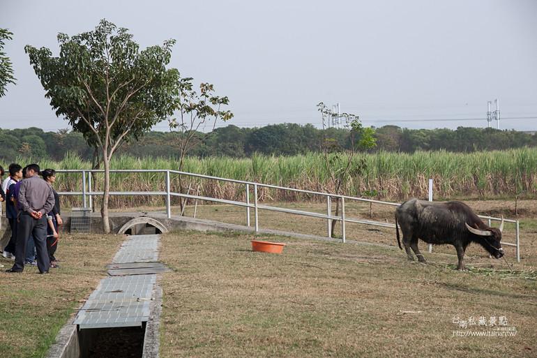 台南私藏景點--德元埤&老牛的家 (29)