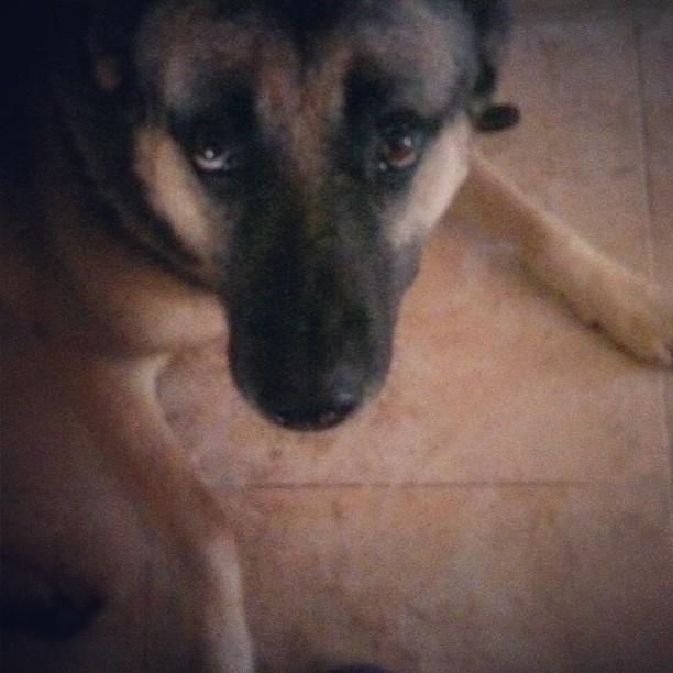Charly, mi hermano perro
