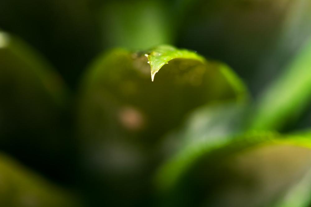 IMAGE: http://farm4.staticflickr.com/3806/12133303733_afdb902667_b.jpg