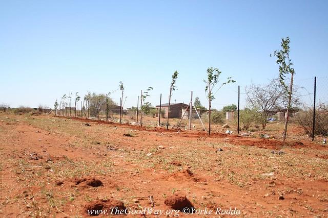TreePlanting_62
