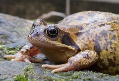 DSCF9051 Frog