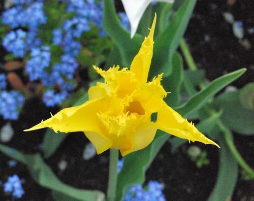 4_yellow
