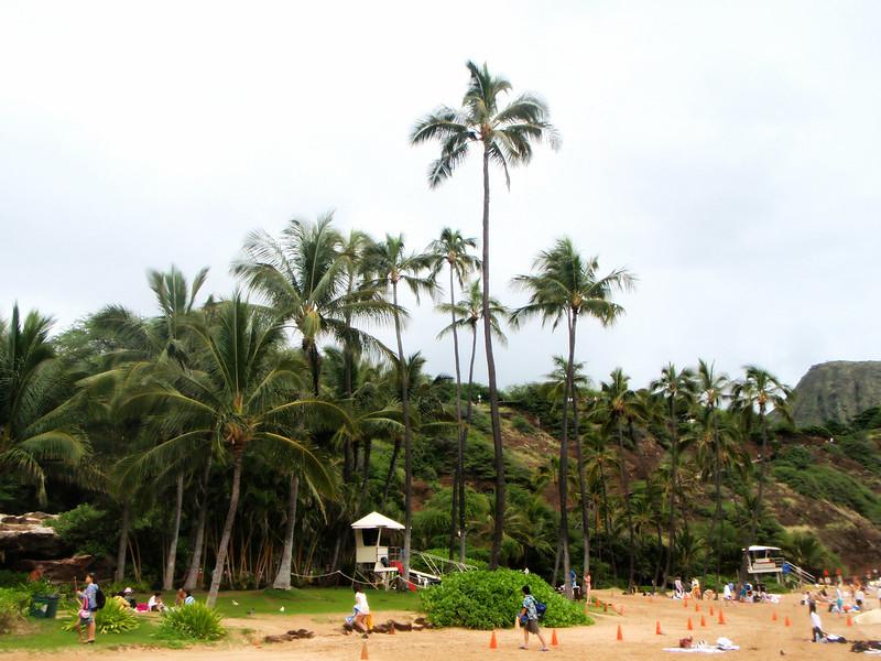 aloha11