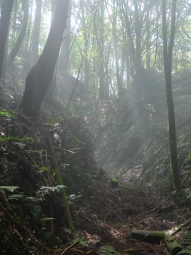 20140322-馬崙山 (176)