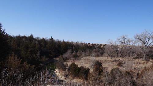 Pressey WMA landscape