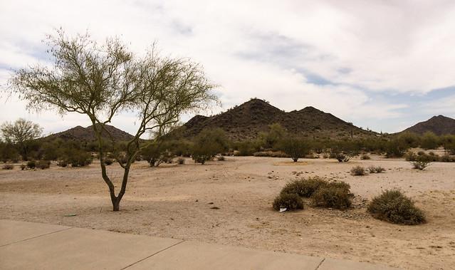desert_near_coolige-20140525-100