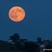 Blue Moon over Iowa 7-31-15 by Thomas DeHoff