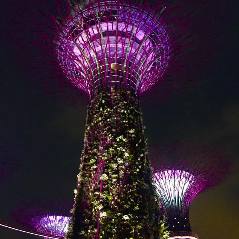 Acabas de convertirte en mi ciudad favorita #GardensByThebay #Singapur
