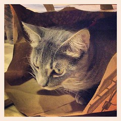 Cat in a bag.
