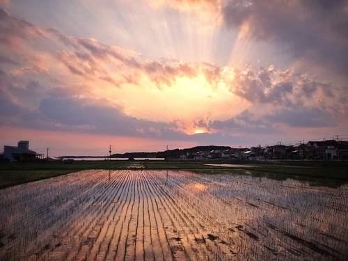 camera travel sunset field japan countryside rice paddy araki chiba leslie taylor 日本 gaijin 旅行 iphone 夕焼け 千葉県 米 外人 田 外国人 snapseed lestaylorphoto