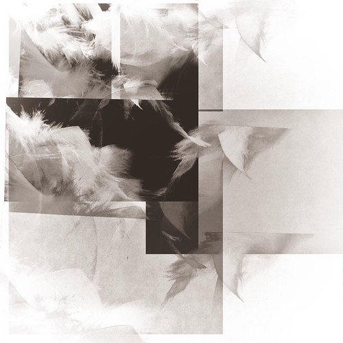 Fowl/montage 5.24.13