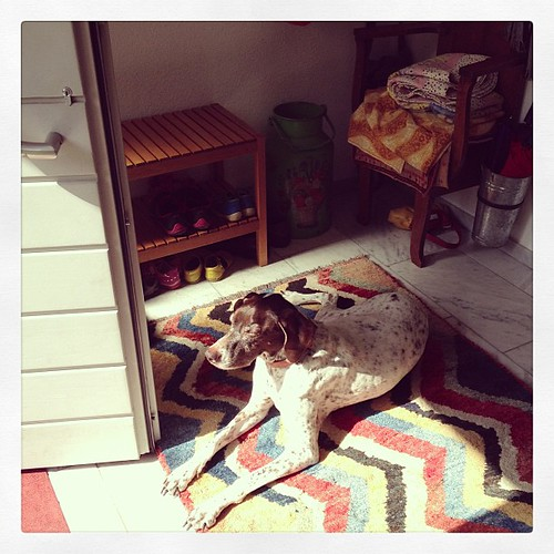 I can't close my front door. #sunlover #gsp #germanshorthairpointer #dog #foyer #june #aachen #germany