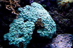 animal(0.0), coral reef fish(0.0), coral reef(1.0), coral(1.0), organism(1.0), marine biology(1.0), stony coral(1.0), marine invertebrates(1.0), underwater(1.0), reef(1.0),