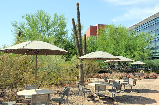 Charming Pictures Of Landscape Architecture Arizona