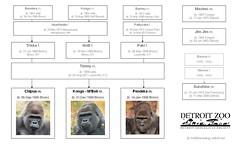 Gorilla Family - Detroit