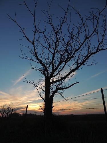 sunset contraluz arbol atardecer country bobdylan campo silueta ocaso lateafternoon layladylay fuenes diegostiefel