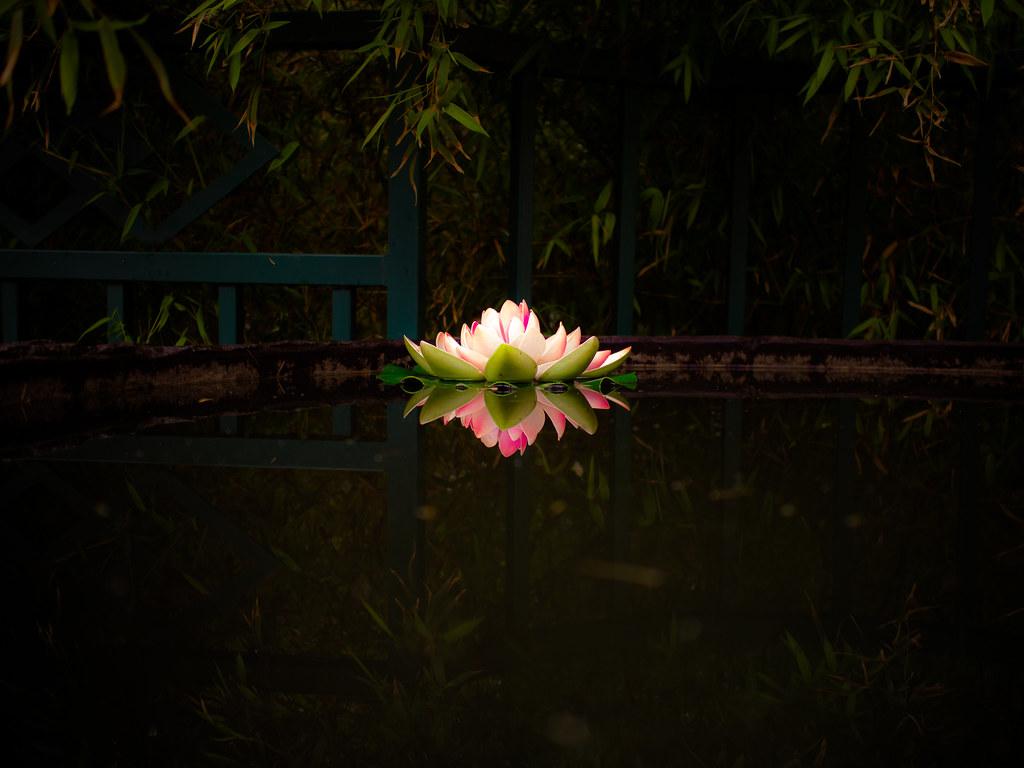 Yonghe Temple Lotus