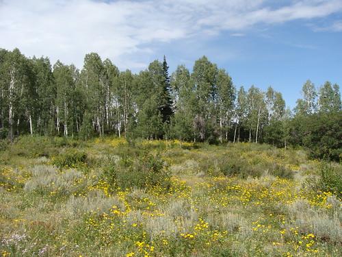 meadow turkeyflats uncompahgreplateau