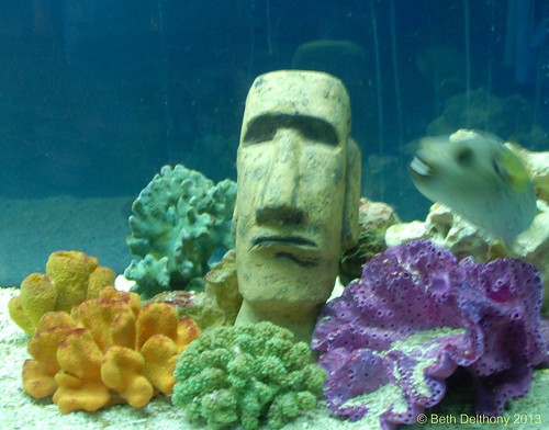 Santiago tourist flickr photo sharing for Moai fish tank