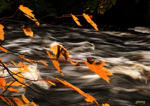 Leaves Over River