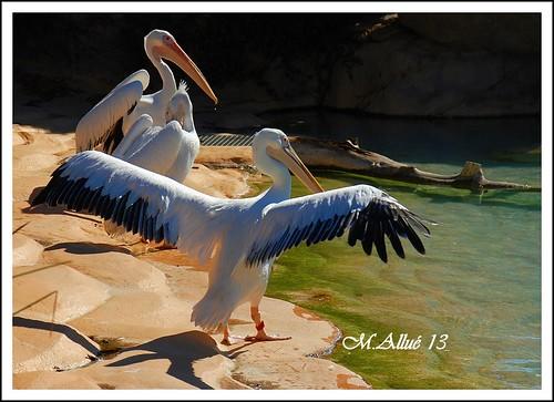 Fotos Valencia 24-26-9.10-1 195-crop by Miguel Allué Aguilar