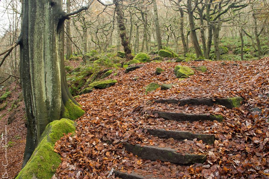 billy clapham wood peak district padley gorge landscape photography