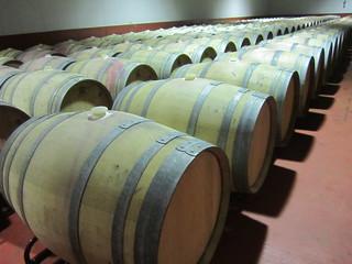 Hileras de barriles de vino de Rueda.