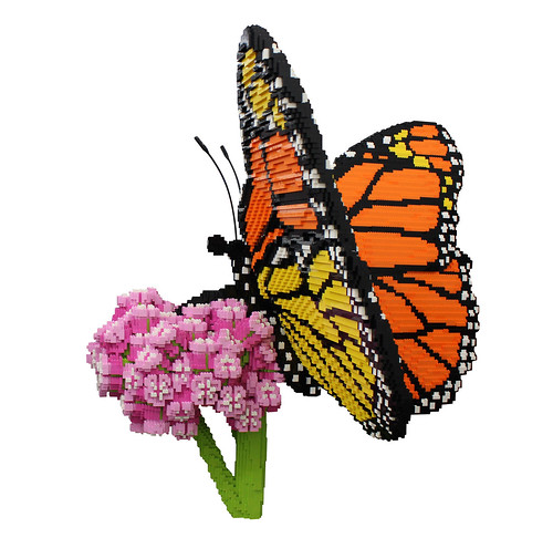Butterfly_1_clipped