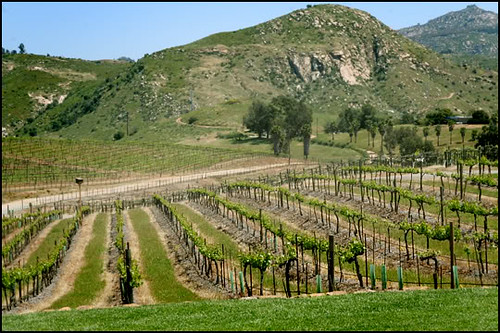 Orfila Winery