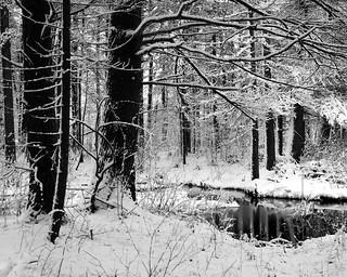 20140119_110809 : 52 in 2014 : #2 Winter