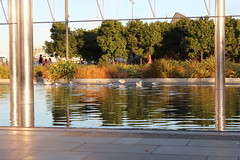 Sea gulls enjoying public art