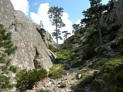 Trace de Quarcitellu : la trace vers le haut le long de la dorsale rocheuse de la crête