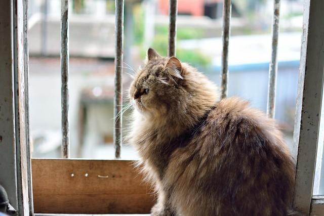 20140412 猫咪剃毛去 - 动物与宠物 - mobile01