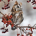 Eastern Screech Owl-red phase by gerstat