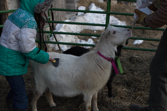 Mimi's Caring for Goats 4-H Presentation