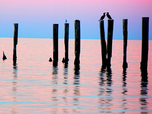 lake water cormorants landscape louisiana colorful dusk scenic vivid mating cormorant lovebirds mates tranquil ponchartrain metairie lakepontchartrain avain explored 9500views hellcatphotographylake