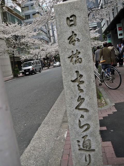 Sakura 2014 Yaesu Sakura Dori
