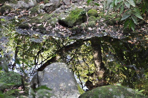 山之家旁的小溪