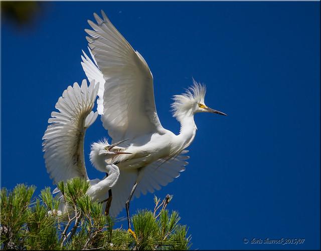 'birding warfare'