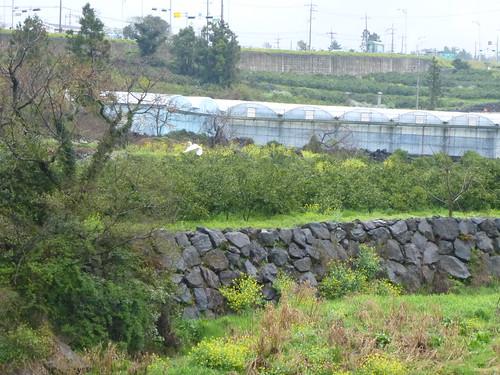 Co-Jejudo-Seogwipo-Sentier Olle 9 (9)